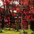 桜苑の紅葉