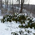 まだまだ、寒い雪 P1010857