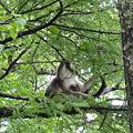 Photos: 母子猿