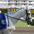 写真: 川崎競馬の誘導馬05月開催 こいのぼり青Ver-120514-17-large