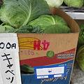 100円キャベツ ?