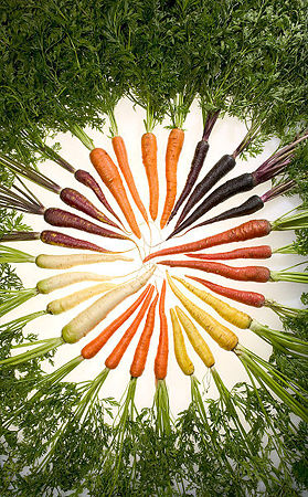 372px-Carrots_of_many_colors