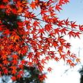 写真: 『盛秋。。。』