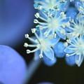 Photos: 青い珊瑚礁