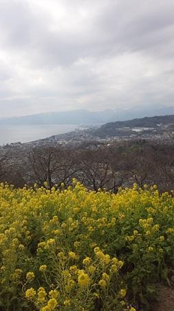 菜の花畑から@吾妻山山頂