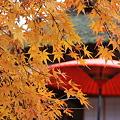 ニッポンの秋