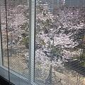 Photos: 庭の桜の下に花見出来るラン...