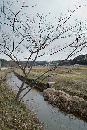 Creek03112012dp1