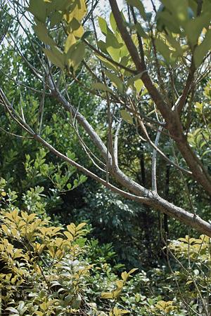 tree03262012dp2-02