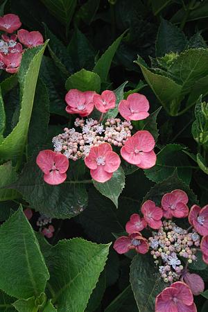 Flower07022011sd15-10