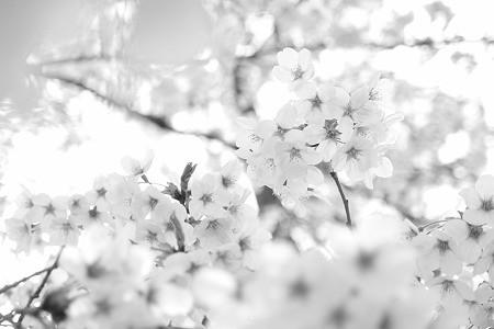 花襲~はながさね~
