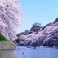 写真: 岸辺の桜
