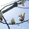 Photos: 春の歌
