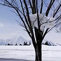 Photos: 雪山と妙高山