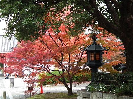 京都 430
