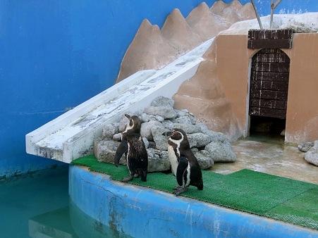20120114 犬吠埼 ペンギンプール03