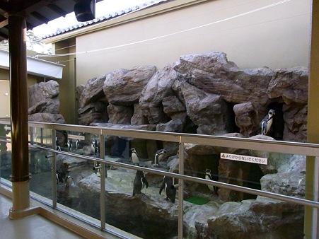 20120104 宮島 まったりペンギンプール02