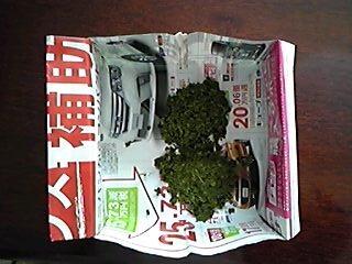 出がらし茶_01