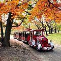 紅葉トレイン