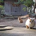 yamanao999_cats_078