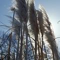 写真: 201201-02-031PZ