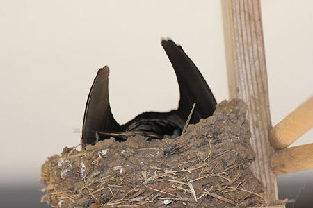 巣を計測?