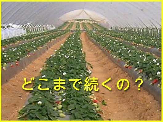 2329_strawberry