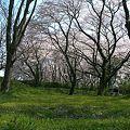 相模川の大島付近の桜2009