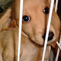 写真: アリア 仔犬