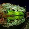 2012年4月8日 船越堤公園 夜桜 パノラマ写真(1)