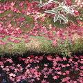 Photos: 天龍寺の紅葉