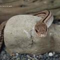 Photos: 足立区生物園(蛇と猫は同じ種だと思う。)