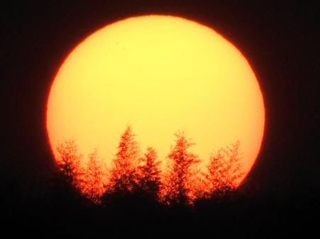 木々が燃える夕陽