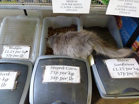 ガーデンセンターの猫ちゃん