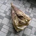 写真: イノシシにかじられた竹の子