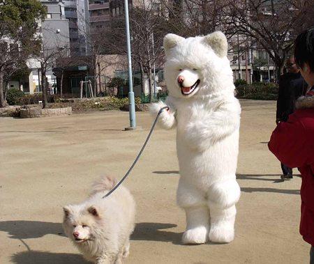犬の仕事~警察犬から盲導犬まで犬が活躍する現場 …