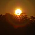 写真: The Sunrise 1-1-12