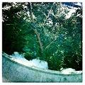 写真: Juniper Berries 1-28-12