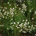 Photos: Male Flowers 6-23-12