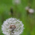 Photos: Waiting for the Wind