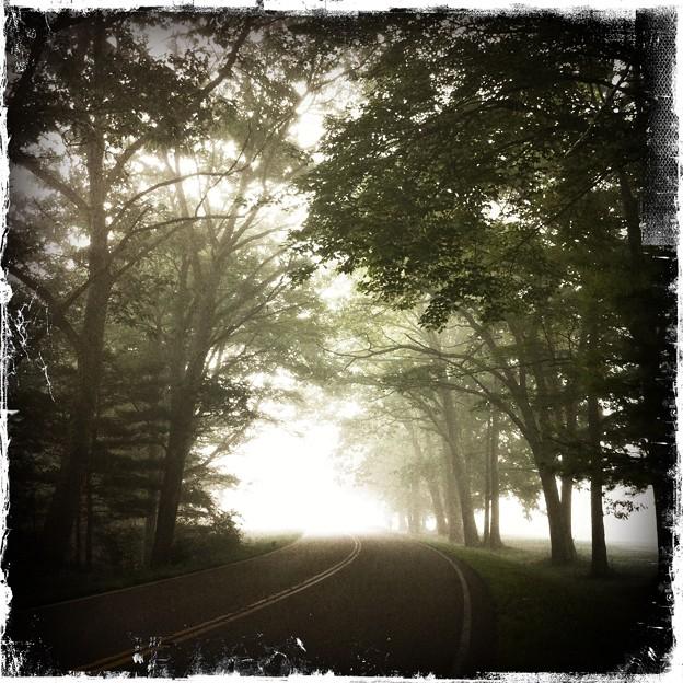 Photos: The Trees and the Fog 8-18-11