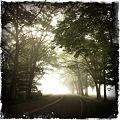 写真: The Trees and the Fog 8-18-11