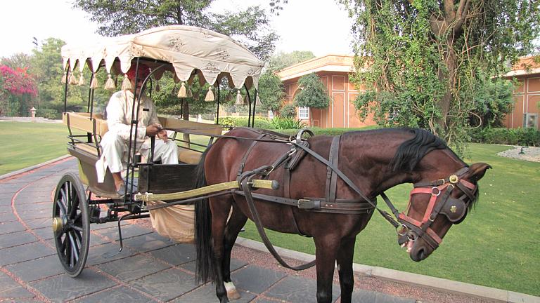園内の馬車