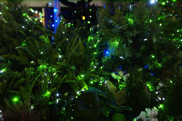 エコエンジェル2011 緑の光_03