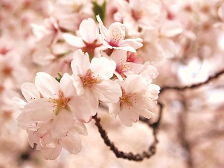 春が、来た