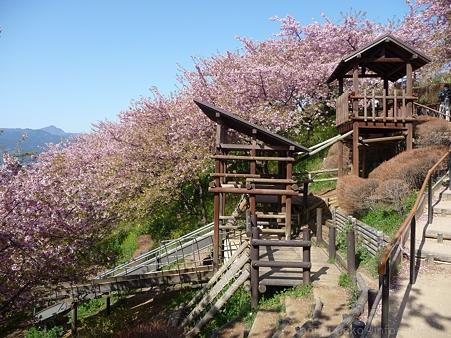 120329-松田山 河津桜 (67)