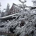 Photos: 円覚寺仏殿1-20120229