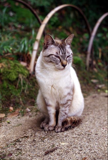 後楽園の猫