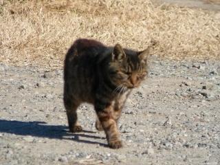 挨拶ネコ2