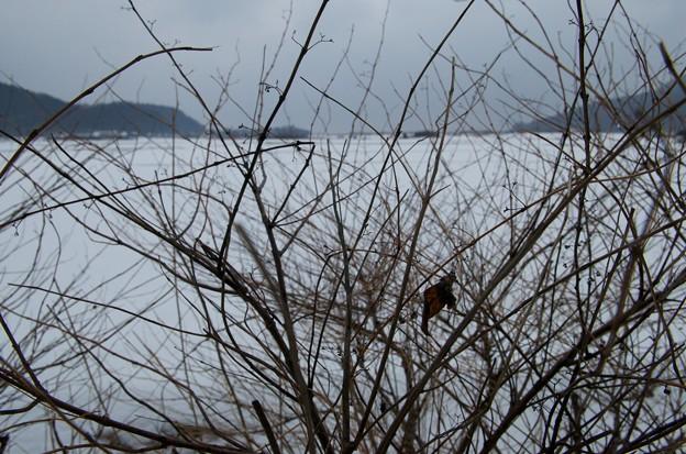 雪国の春はまだ遠い。